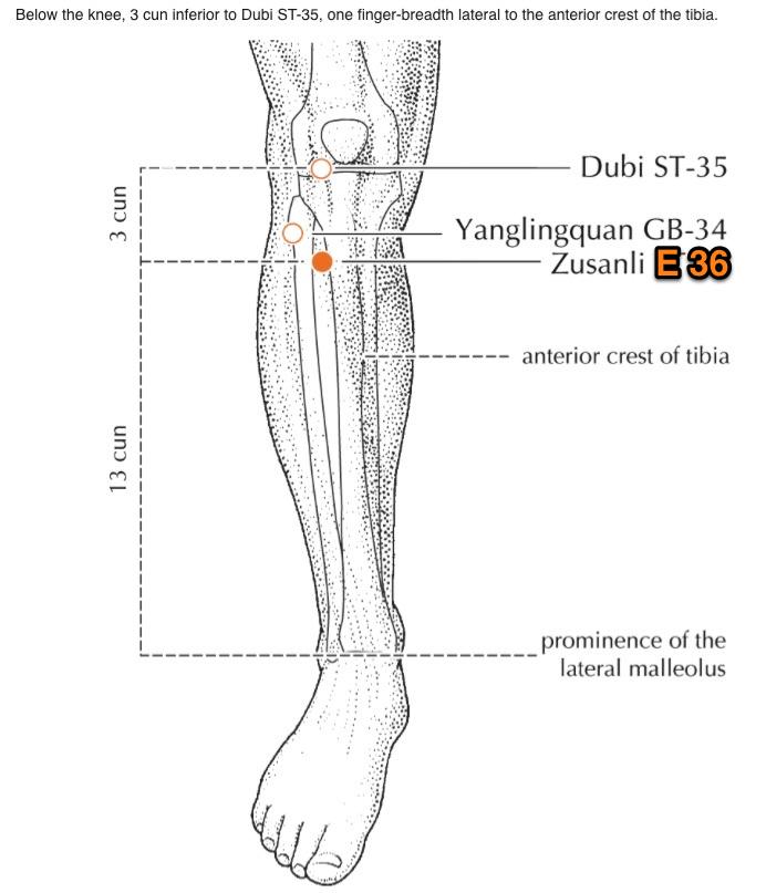 ZuSanLi. 36ème de l'estomac. Le point de la longévité,
