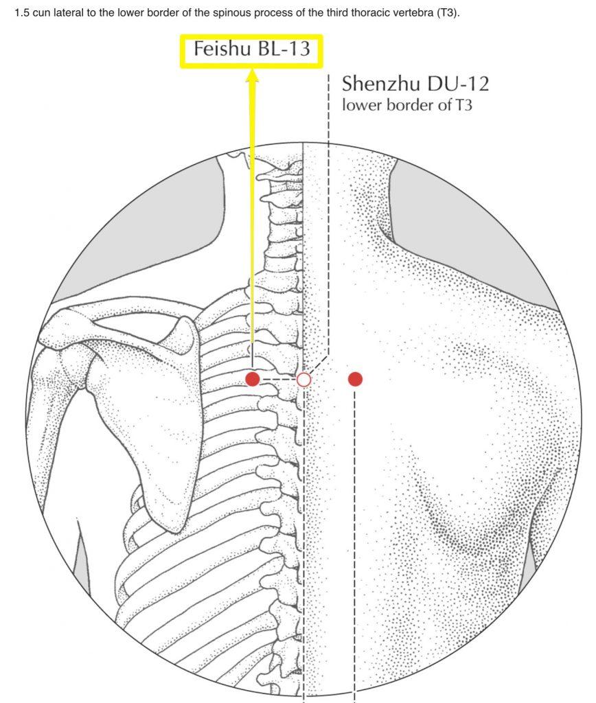FeiShu, 13ème point de la vessie. Traiter les dysfonctionnements du poumon.
